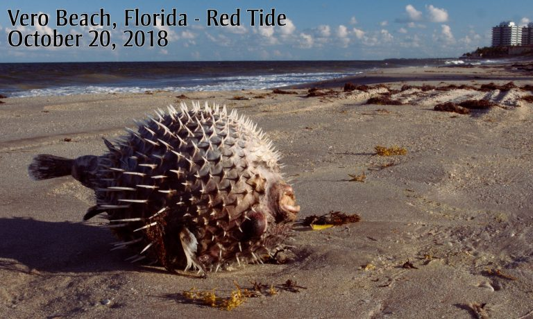 Florida must turn the toxic tide