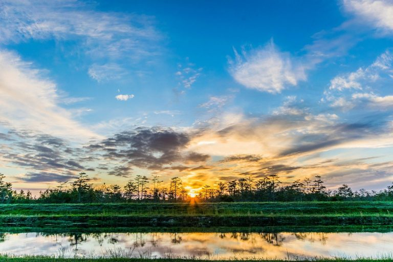 Florida's Wetlands Threatened by Loss of Federal Oversight